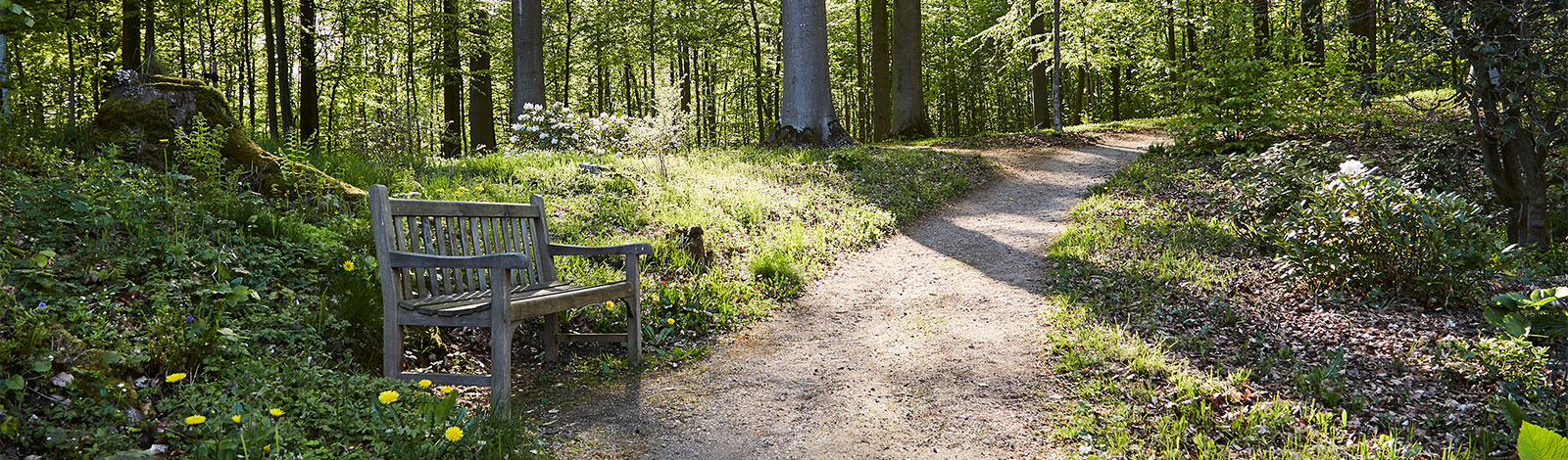 Trails with benches across the beautiful area